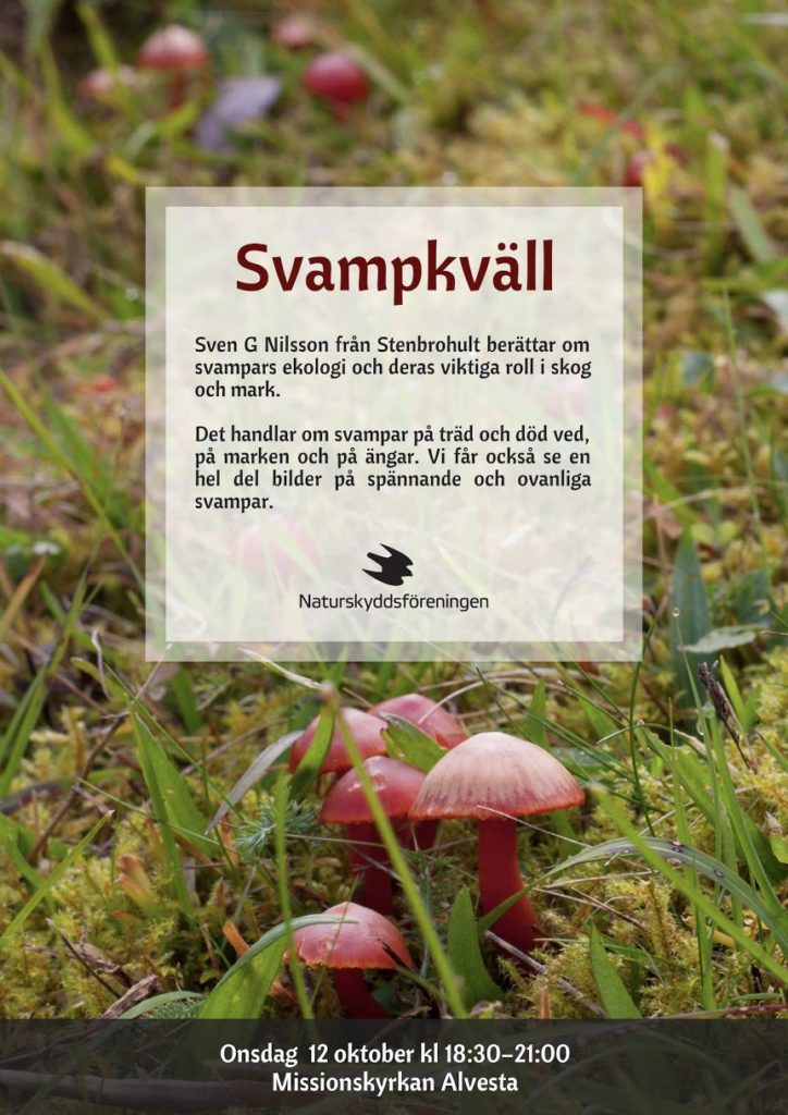 svampkvall_mail